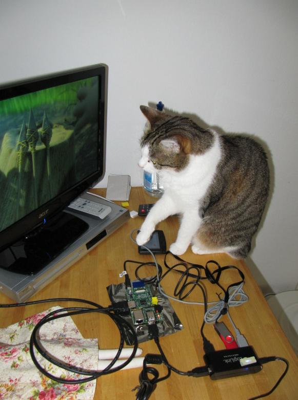 Un beta tester en proceso de supervisión