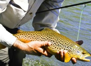 Wyoming fly fishing guide