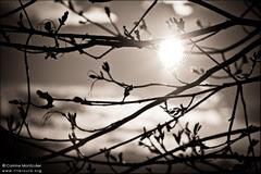 Au milieu des branches