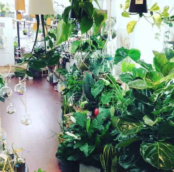 5 Unique Plant Stores In Toronto