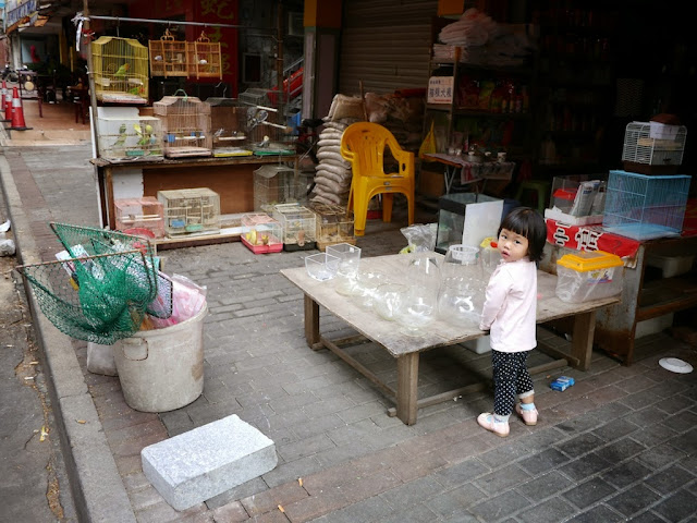 little girl looking at me while she stands at a low table with fishbowls in front of a pet store