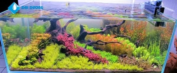 hồ thủy sinh theo phong cách hà lan 5