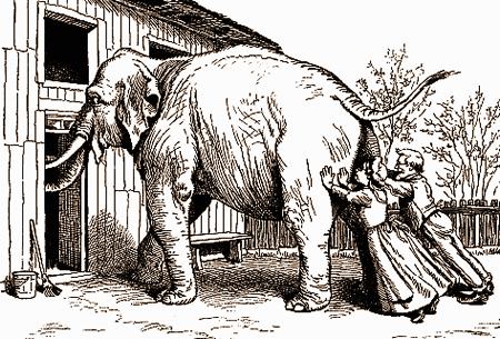 zilonis mēģina ieiet pa vārtiem