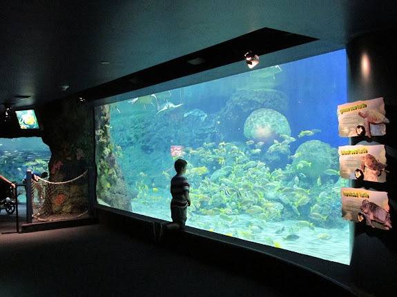 Bradley watching the fishes