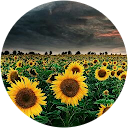 sofia cornfield