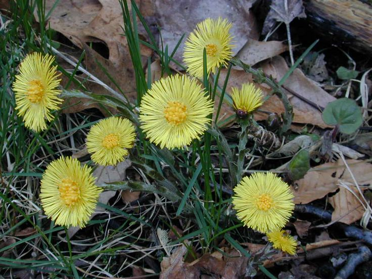 Field biology in southeastern ohio early spring wildflowers early spring wildflowers mightylinksfo Image collections