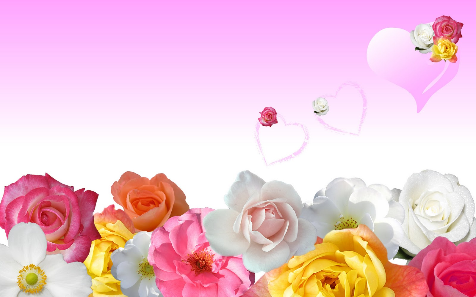Rode gele witte roze en oranje rozen wallpaper