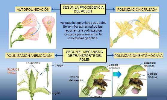 Plantamer polinizaci n en las plantas y tipos for Cuales son los tipos de plantas