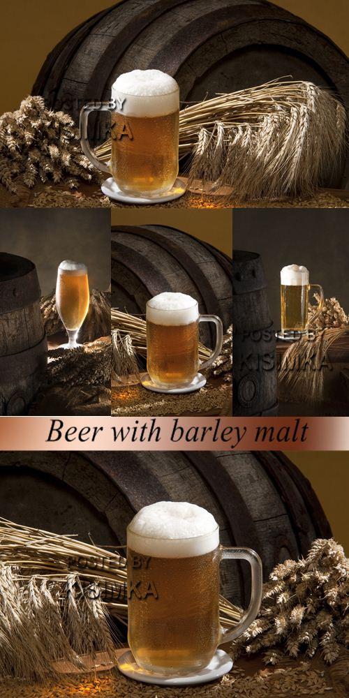 Stock Photo: Beer with barley malt