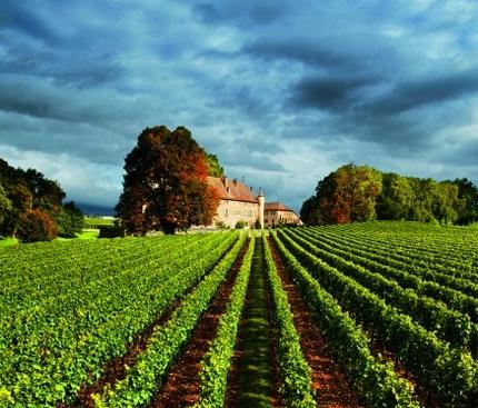 La noblesse des vins suisses - Château d'Allaman