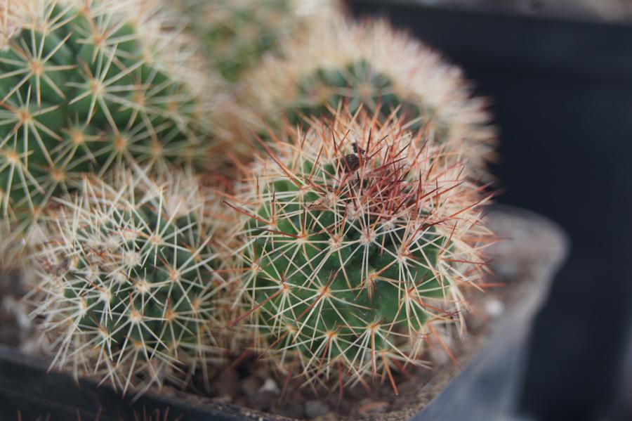new plants DSC09496a