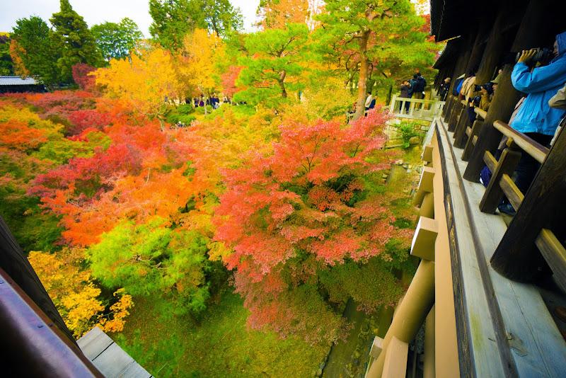 京都 東福寺 紅葉 写真1