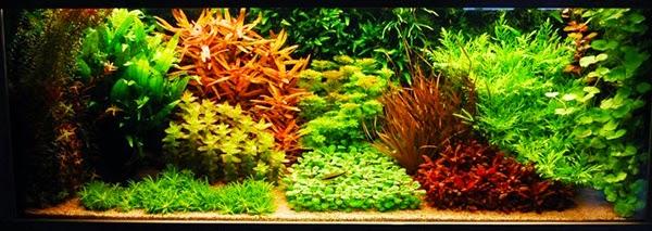 The Dutch Aquarium