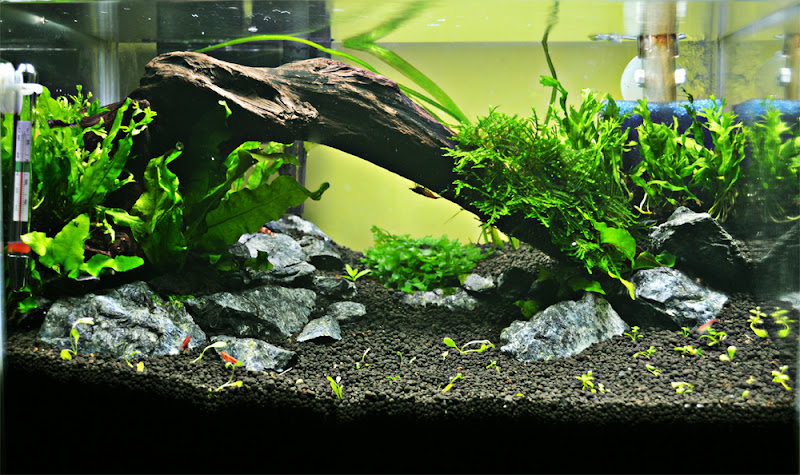 ::|| All About Aquascape ||::