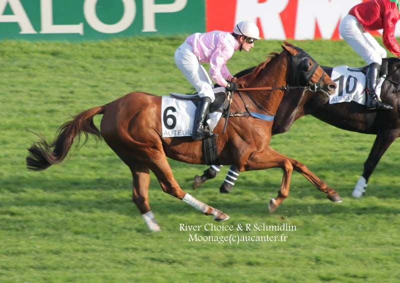 Photos Auteuil 2-11-2014 (48h de l'obstacle) IMG_5638