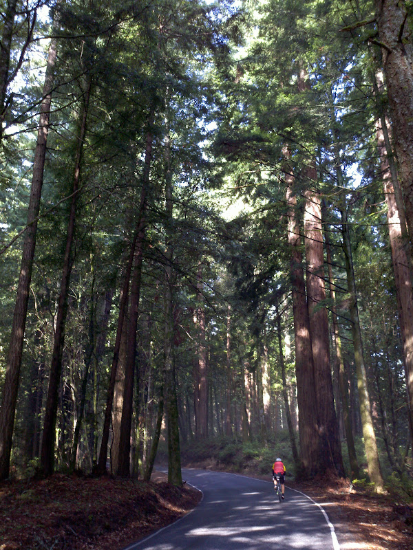 Santa Cruz Mountains Challenge • Big Basin Redwoods State Park