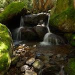 Mossy creek (276596)