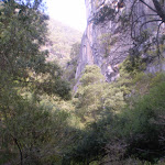 Part of the cliffs surrounding the Jenolan River (8825)