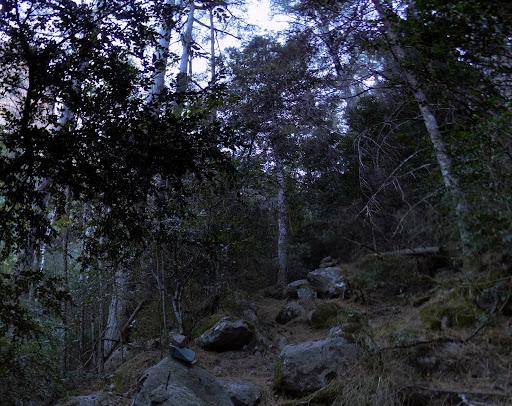 Nous bifurquons sur un sentier bien ouvert à droite qui nous enfonce profondément dans la forêt...