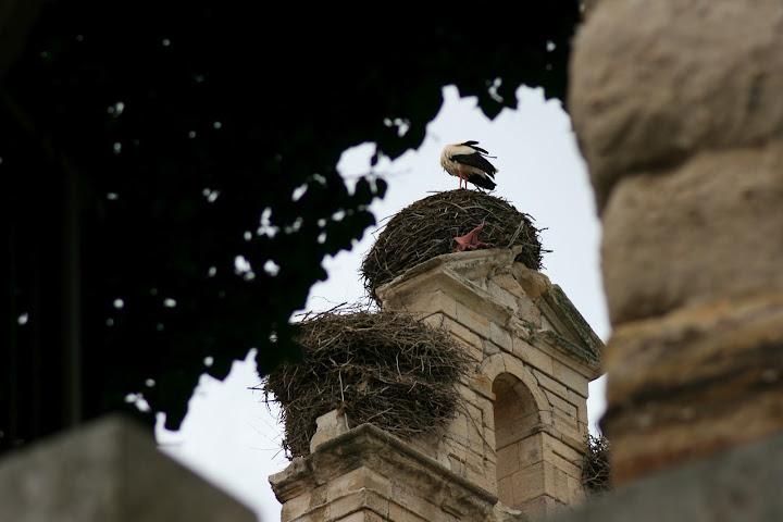 Zamora no se toma en 1 hora - Página 2 20090418_2794