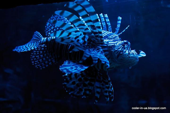 прага. морской свет