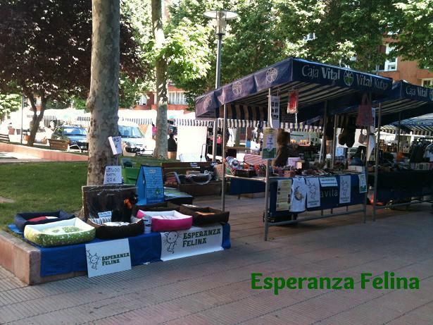 Esperanza Felina en el mercado del Barrio de San Martin. Domingo 22/06/14 Vitoria IMG_1776