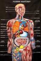 http://asalasah.blogspot.com/2013/05/penjelasan-lengkap-anatomi-tubuh.html