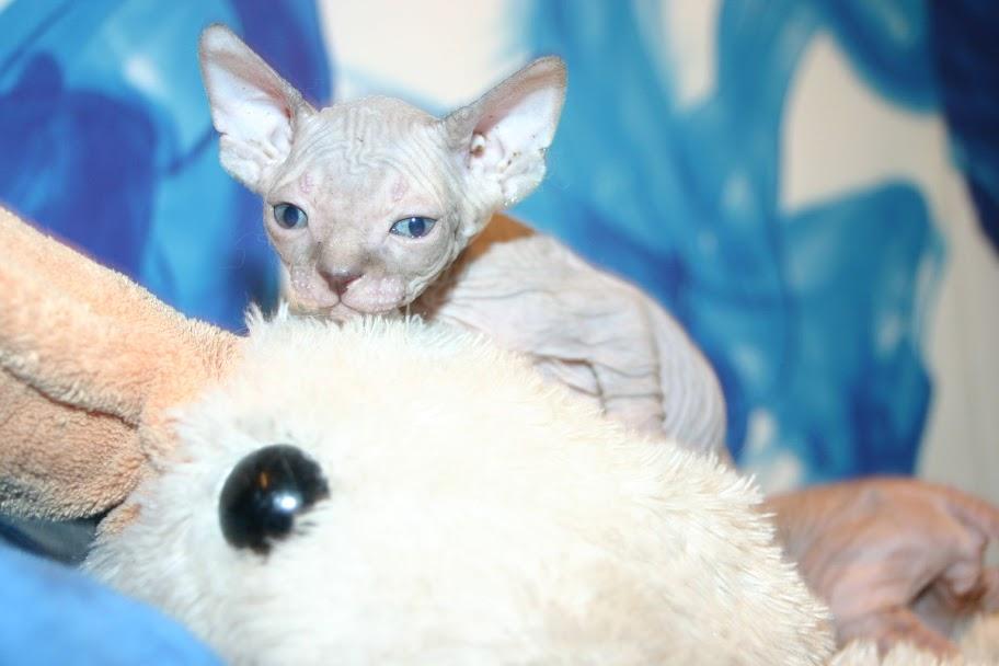 1 er Thème : Quand votre/vos chats étaient chatons May6%2520182