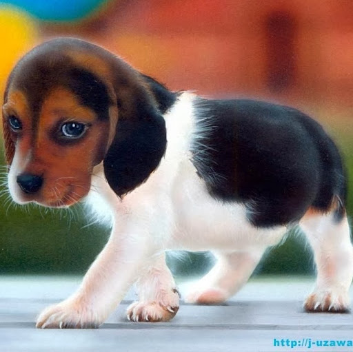 puppydog