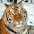 JOSE SALAS avatar image