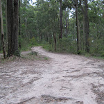 Road into Little Mountain campground