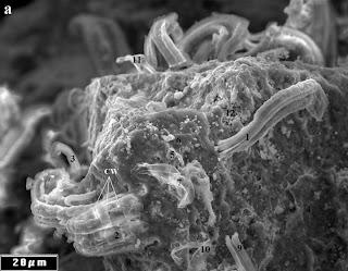 Filamentos en el meteorito Orgueil visto bajo un microscopio electrónico de barrido