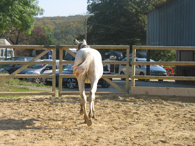 vends pouliche appaloosa PP Dune Miracle Layon IMG_5273