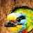 Chana Korenblit avatar image