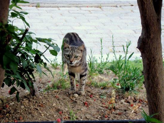 grecki kociak na polowaniu