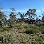 Granite outcrop on the Rennix Walk (269558)