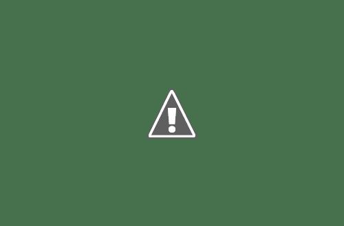 526218 566457556697895 1383714111 n+copy - Кошки ))