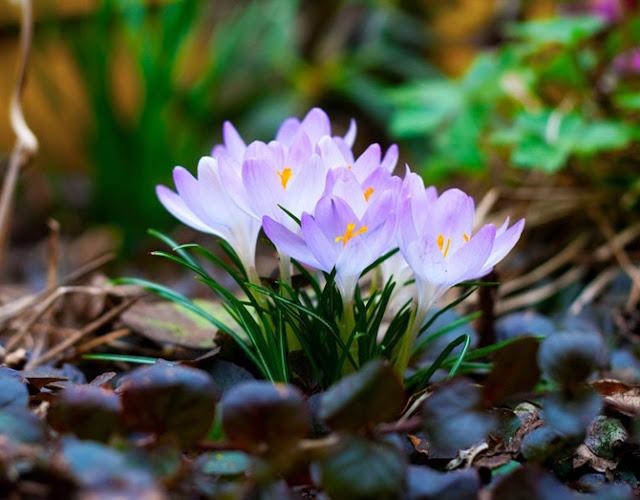 Fotos de Primavera