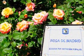 Concurso Popular 'Rosa de Madrid' en la Rosaleda del Parque del Oeste