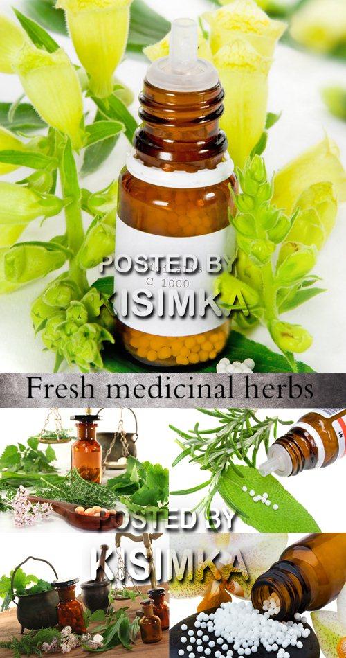 Stock Photo:Fresh medicinal herbs
