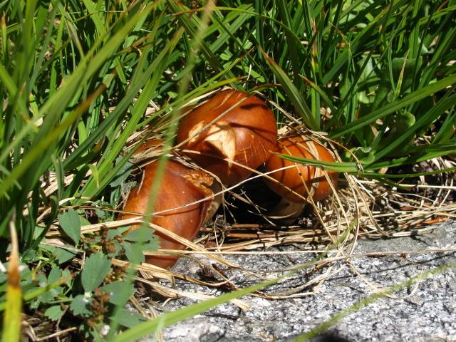 little mushrooms in the meadow