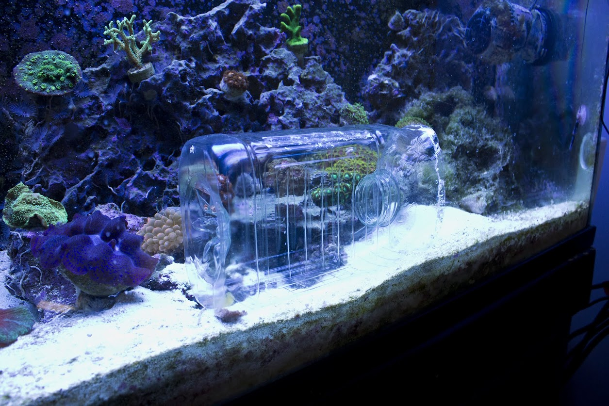 Fish trap aquarium 1000 aquarium ideas for Aquarium fish trap