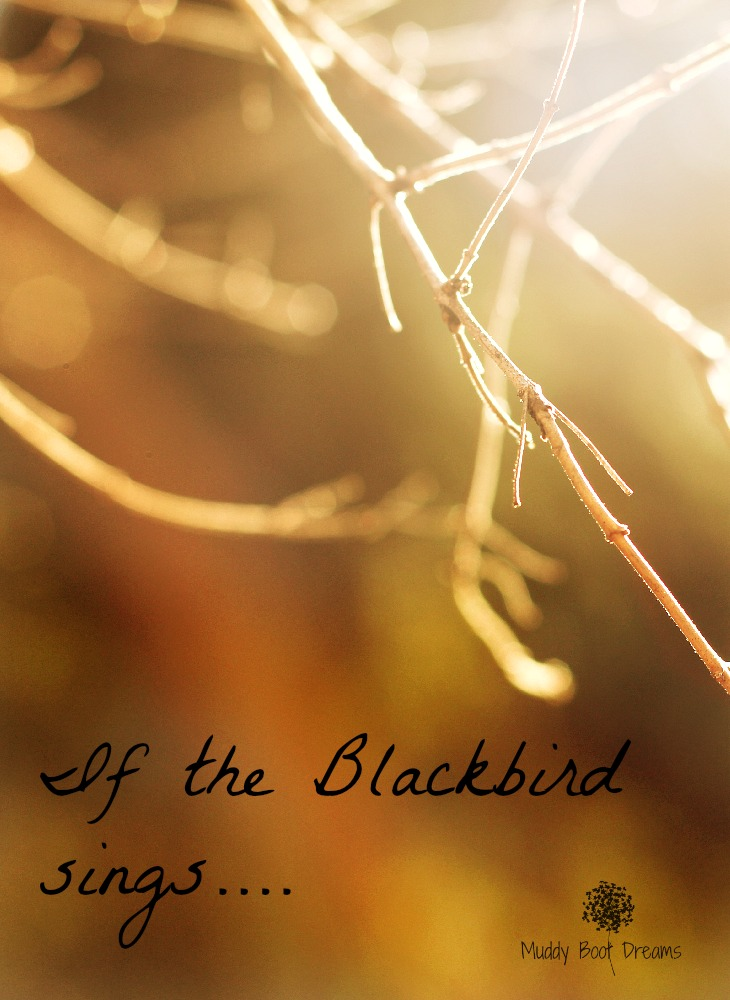 If the Blackbird sings?