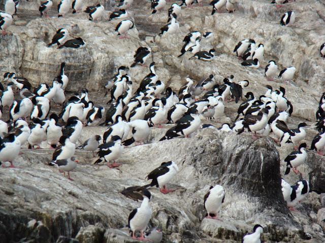 Canal de Beagle, Ushuaia, Argentina, Elisa N, Blog de Viajes, Lifestyle, Travel, cormoranes