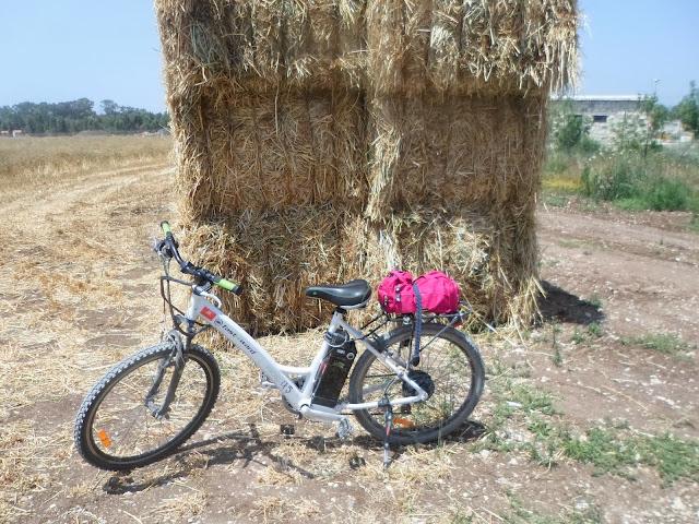 שטיין טיולי אופניים חשמליים לכל המשפחה ברמת דוד- א...