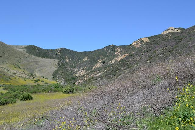line of vegetation changing
