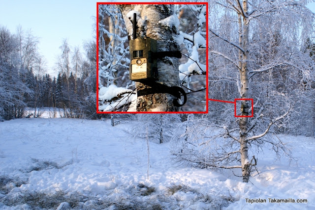 riistakamera riistakameratesti riistakameravertailu riistaruokinta talviruokinta ruokinta-automaatti rehukaali talvimaisema riistanhoito Scout Guard MG582-8M Grube