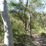 SCribbly gum and heath forest south of Robinson Rd (371110)