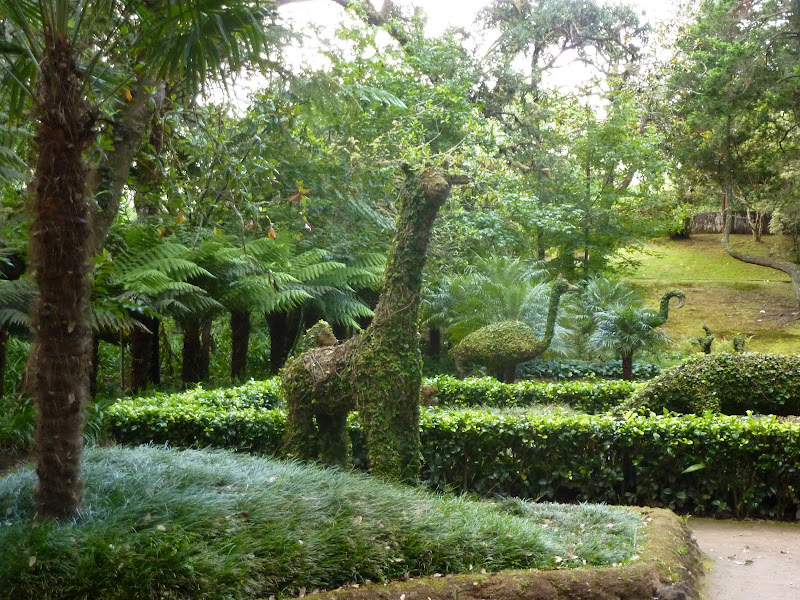 Açores- Natureza viva P1010032