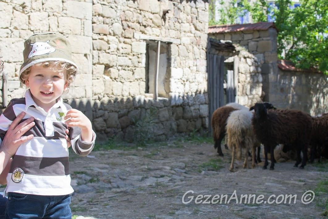 Adatepe'de koyunların yanında
